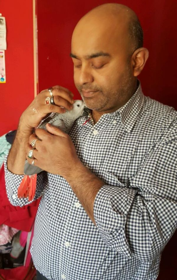 African grey parrot in need of a new home