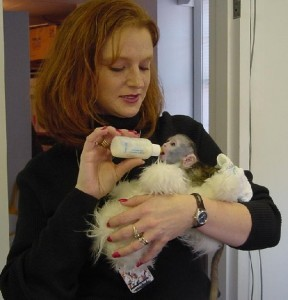 Home trained baby Capuchin monkeys available