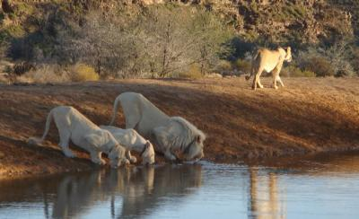 Cape Town Safaris and tours