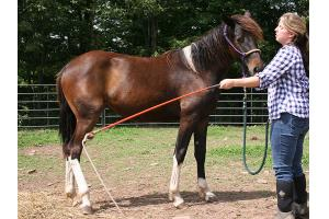 10 year old friesian mareand stallion  horse for free adoption