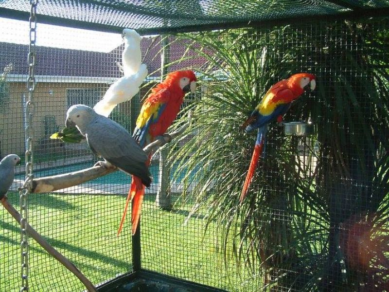 Parrots and parrot eggs for sale
