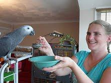 Parrots and eggs for sale