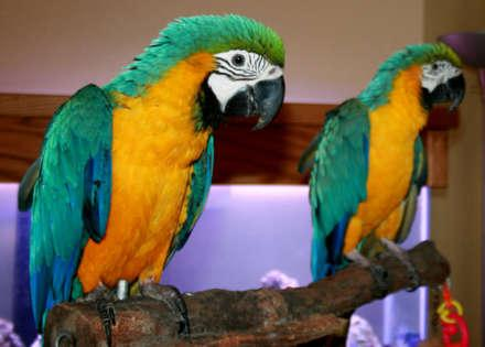 Breeders specialized in selling exotic weaned baby parrots and fresh candle tested fertile parrot eg
