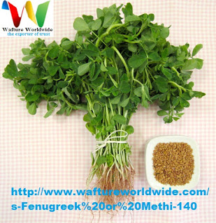 Fenugreek, An excellent herbal remedy.